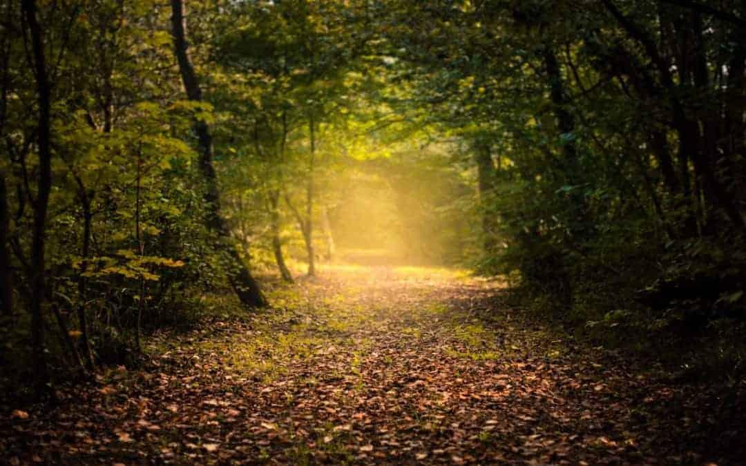 Take a Trip Down Memory Lane
